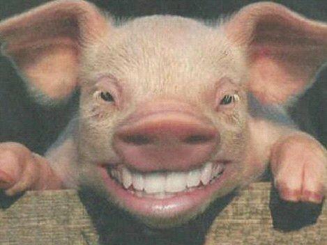 20080110112006-cerdo